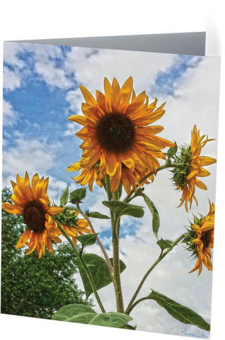 Sunflowers and Blue Note Cards and Greeting Cards (25 Pack)
