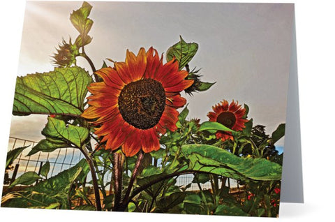 Sunflowers and Storm Note Cards and Greeting Cards (25 Pack)