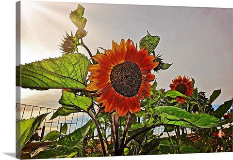 Sunflowers and Storm Canvas Print