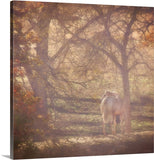 Sunlight's Serenity Canvas Print