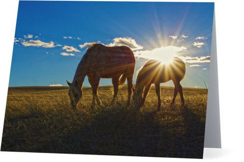 Sunrise Splendor Note Cards and Greeting Cards (25 Pack)