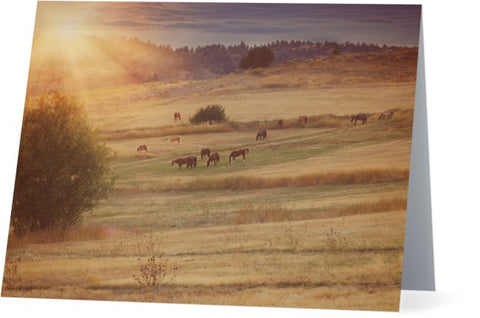 Sunset and Horses Note Cards and Greeting Cards (25 Pack)