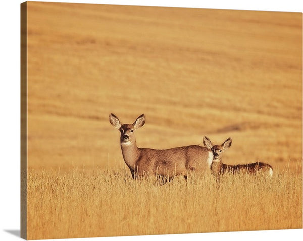 Sunset Deer Canvas Print