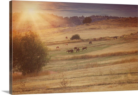 Sunset and Horses Canvas Print