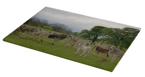Texas Prairie Brahmans Cutting Board