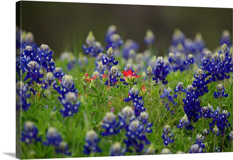 The Lone Star Canvas Print