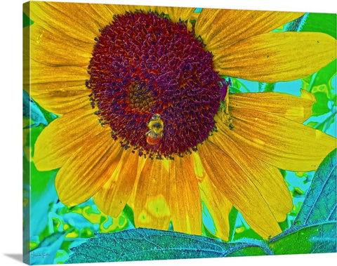 The Sunflower And The Bee Canvas Print