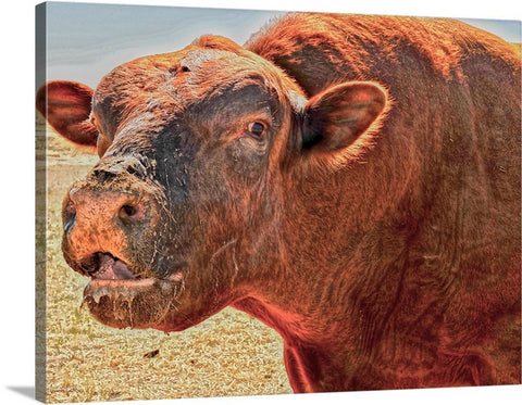 Too Close for Bull Canvas Print