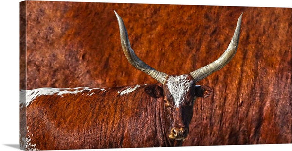 Watusi Blues in Rustic Red Canvas Print