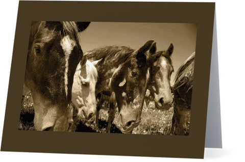 Whimsical Stallions Note Cards and Greeting Cards (12 Pack)