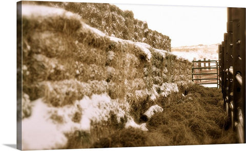 Winter Feed Lot Horizontal Canvas Print