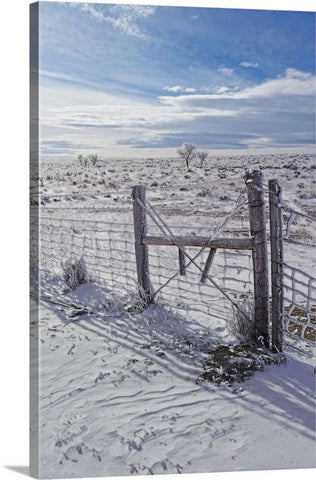 Winter Sunlight On The South Fenceline Canvas Print