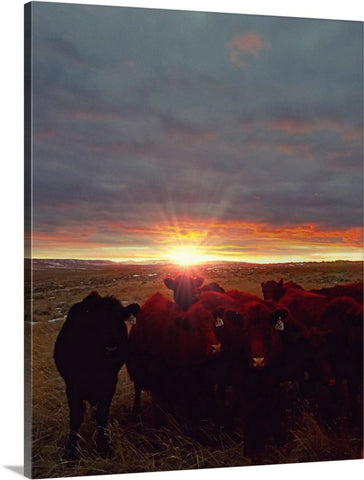 Winter Sunset at Night Feed Canvas Print