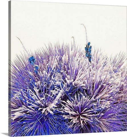 Winter Yucca in Blue Canvas Print