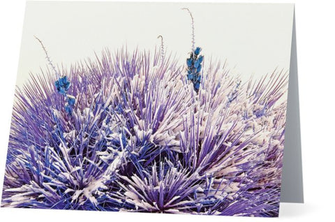 Winter Yucca in Blue Note Cards and Greeting Cards (25 Pack)