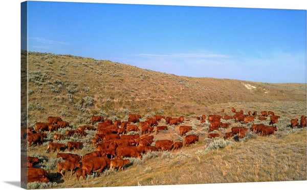 Wyoming Reds Canvas Print