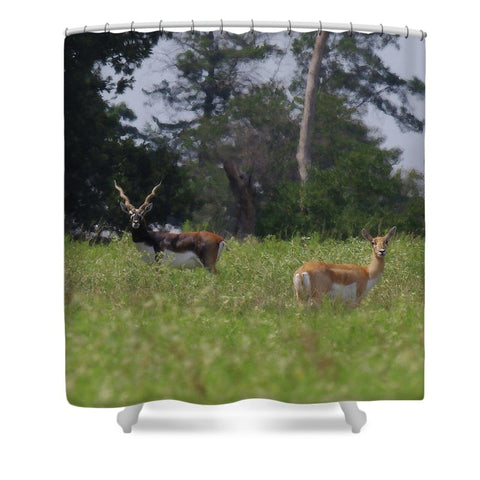 Black Buck and Doe Shower Curtain