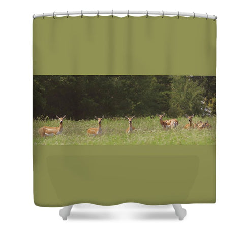 Black Buck Doe in a Row Shower Curtain