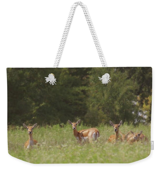 Black Buck Doe in a Row Weekender Tote bag