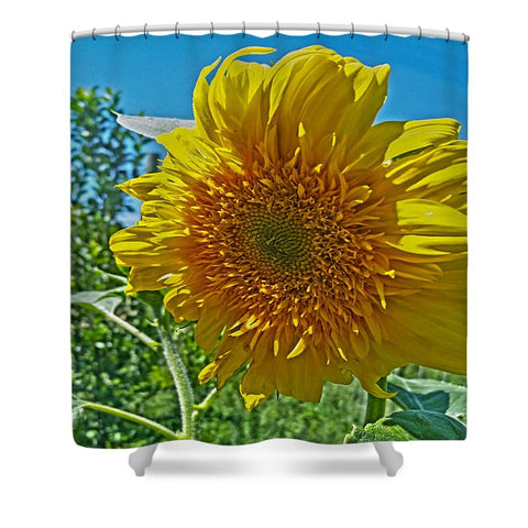 Candy Tuft Sunflower Shower Curtain