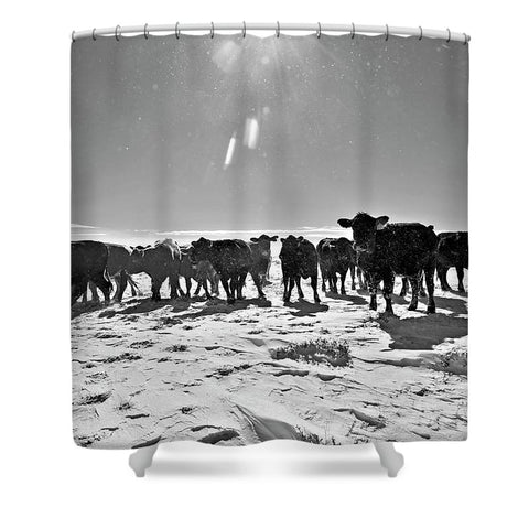 Heifers in the Snow Shower Curtain