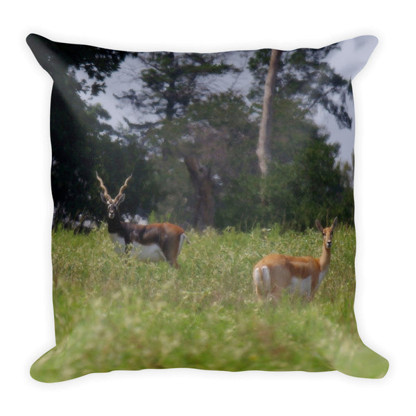 Black Buck and Doe Throw Pillow