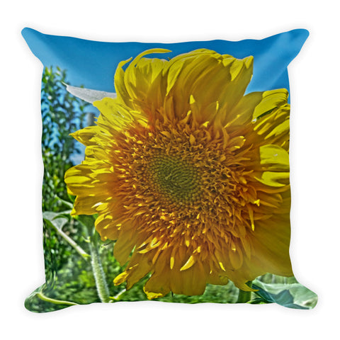 Candy Tuft Sunflower Throw Pillow