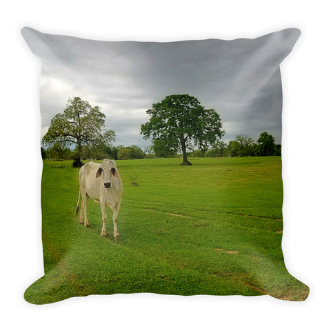 Texas Brahman Mama Throw Pillow