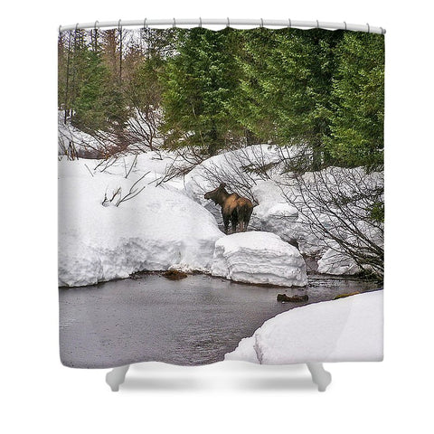 Moose in Alaska Shower Curtain