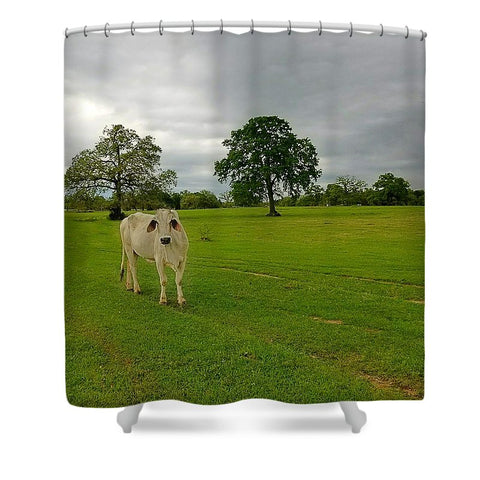 Texas Brahman Mama Shower Curtain