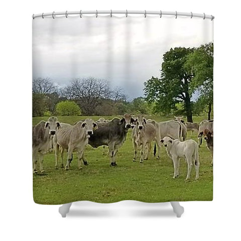 Texas Prairie Brahmans Shower Curtain