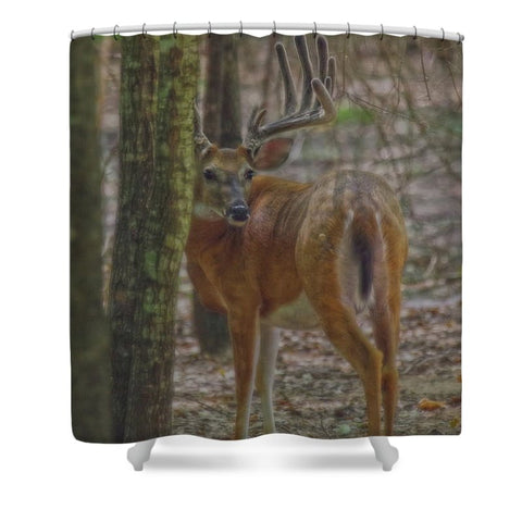Whitetail Buck in Woods Shower Curtain