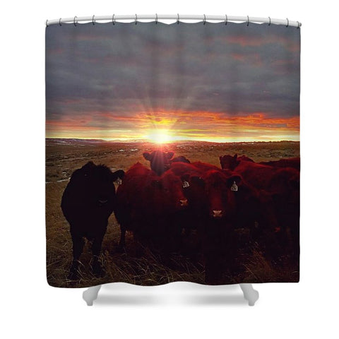 Winter Sunset at Night Feed Shower Curtain