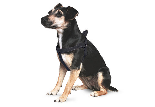 Ancol Dog Padded Reflective Harness