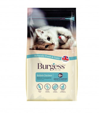Burgess Cat - Kitten
