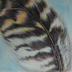 Burnley, Anne Title: Owl Feather #1