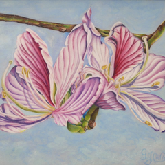Gloria J. Callahan Title: Tulip Tree Blossoms