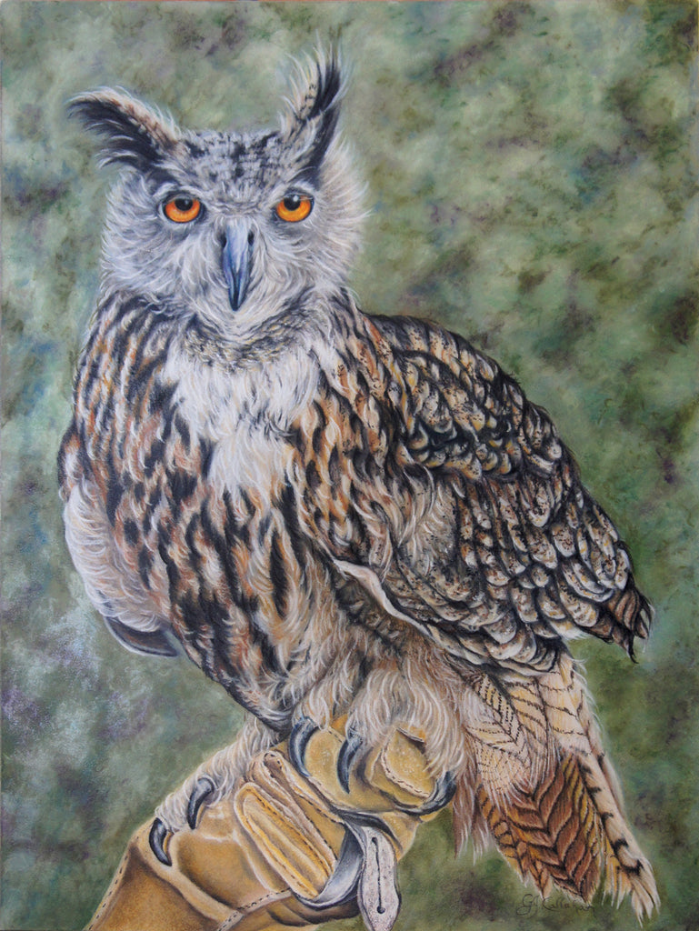 """On Glove"" - Eurasian Eagle Owl"
