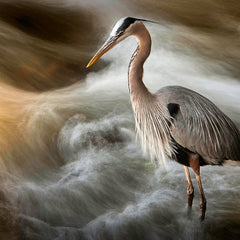David Everette Title: Heron With Intent