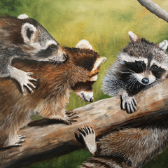 Priddy, Jan Title: Raccoon Rascals