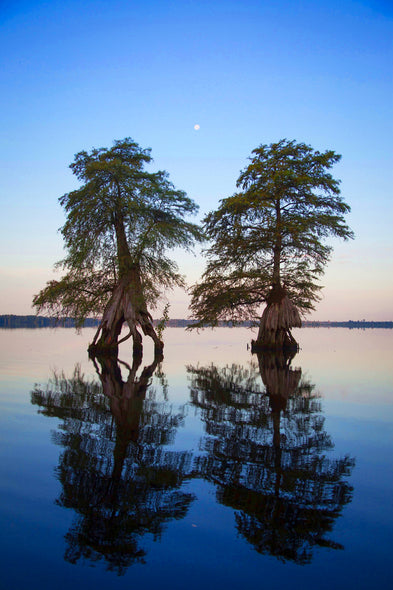 John Henley  Title: Moon Rise, Great Dismal Swamp