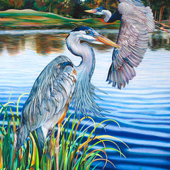 Nancy Jacey Title: Great Blue Herons