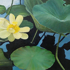 Harrington, Shirley Title: Scenic Lotus Pond