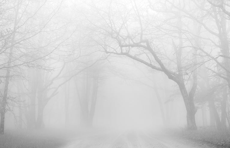 Tom Hennessy Title: April Fog