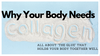 Why Your Body Needs Collagen