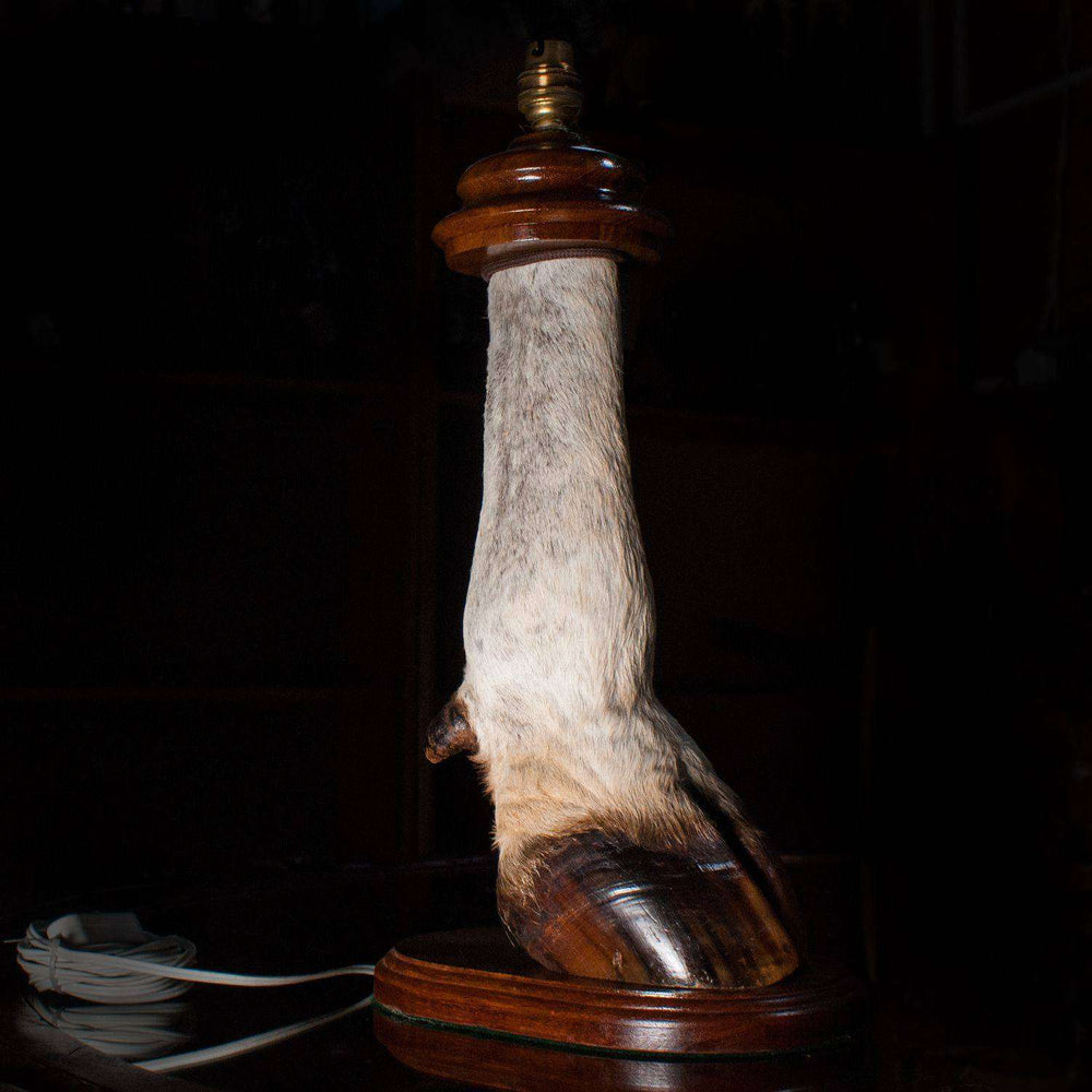 Large Eland Leg Table Lamp with Fitting on Stand - Africa Handmade