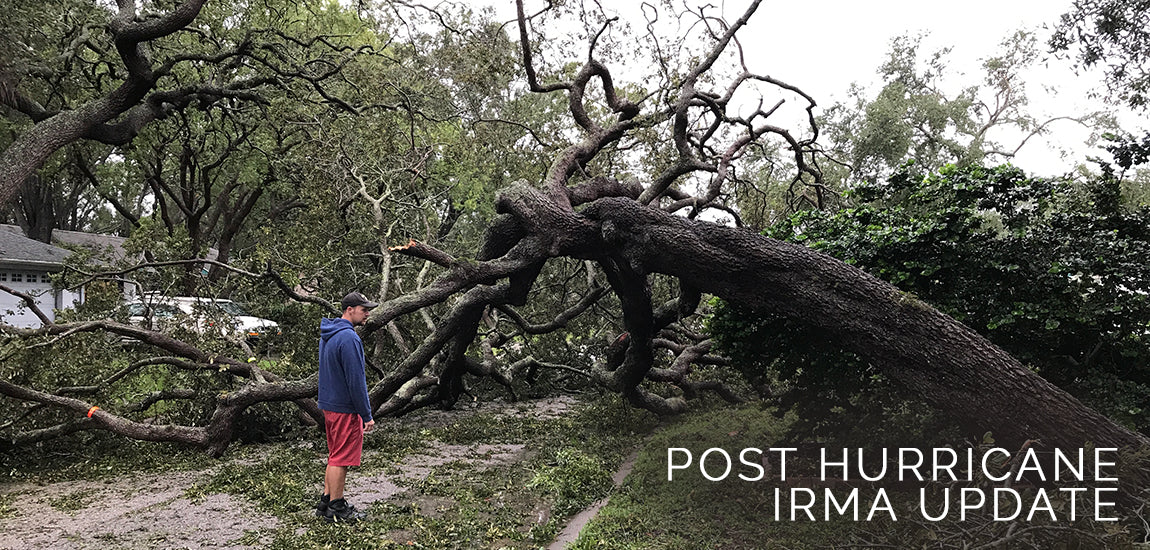 Sabbat Box Post Hurricane Irma Update 2