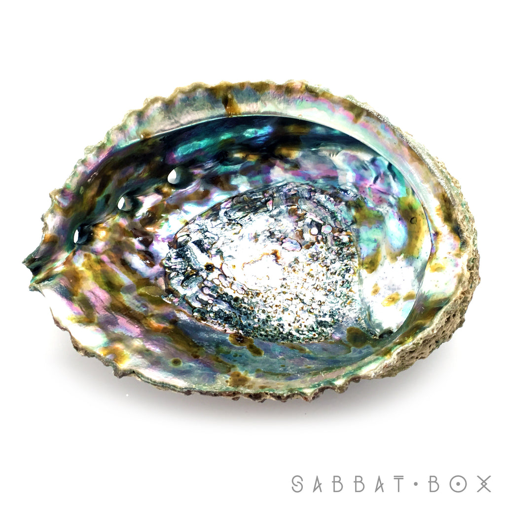Abalone Shell Ritual Offering Bowl/Incense Burner