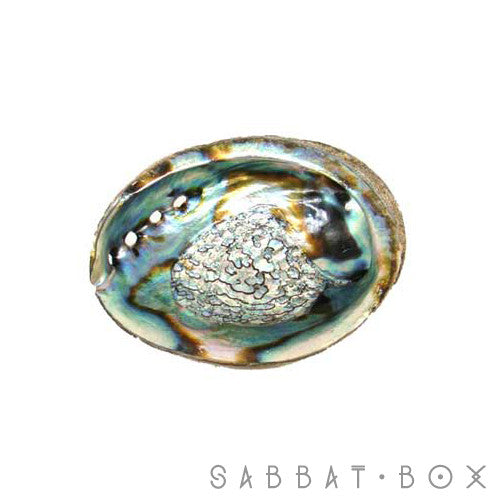 Abalone Shell For Sage and Smudging Rituals - Sabbat Box