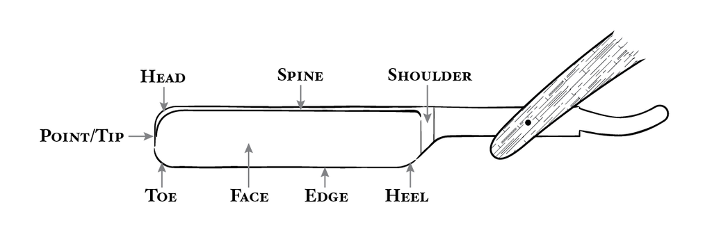 Enchanting Straight Razor Anatomy Image Anatomy And Physiology